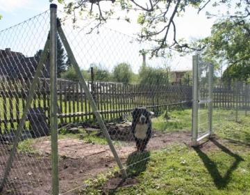 Koera aedik ja värav